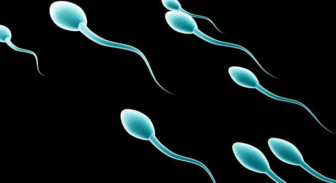 Do you know how long sperm can survive after ejaculation?